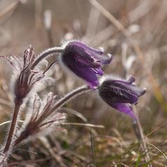 Весна в степах