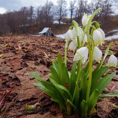 Ото була весна:)