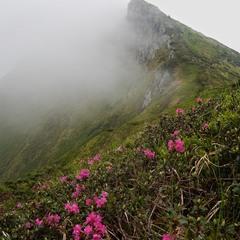 В Гуцульських Альпах