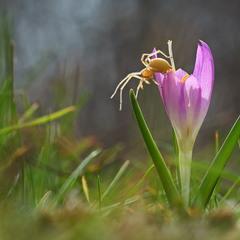 Весна на Хортице