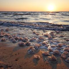 Черепашково-медузний берег