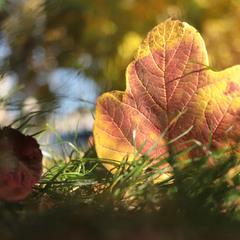 осень, спасибо
