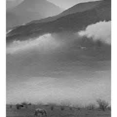 лошадка под облаками