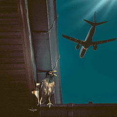 Птица и Самолет