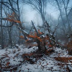 Как приснилась лесу осень..