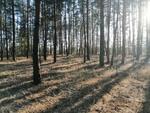 Лесные линии / Forest Lines