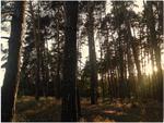 Тёплый лес (Возвращение)