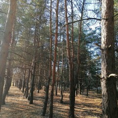 Древляндия / Woodland Space