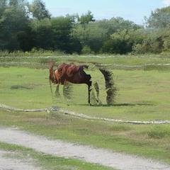 Horse (glitch #14)