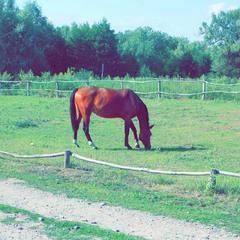 Horse (glitch #10)