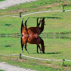 Horse (surreal #1)