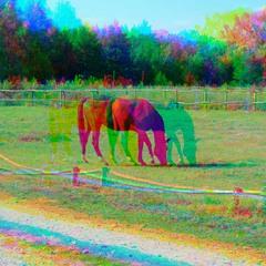 Horse (glitch #18)