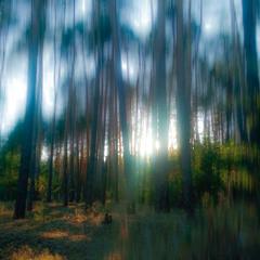 Лес сквозь слезу