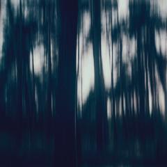 лесная готика / Forest Gothic