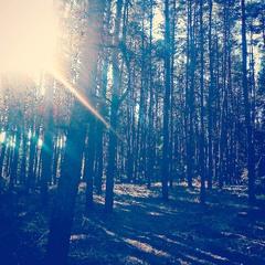 Солнце в синеве / The Sun in Blue