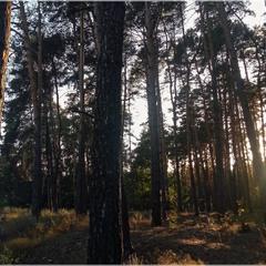 Прохладный лес. Возвращение