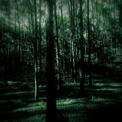 Глубокий лес / Deep forest