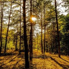 невозможный лес