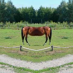 Horse (glitch #12)