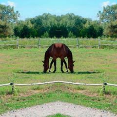 Horse (glitch #7)