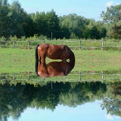 Horse (glitch #9)