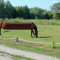 Horse glitch (#19 / LIMO)