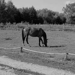 Монохромная лошадь
