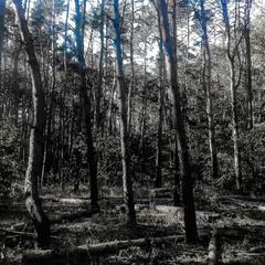 Чернильный лес / Ink Forest