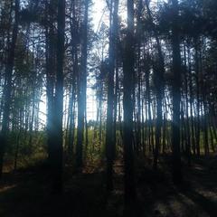 Сквозь деревья
