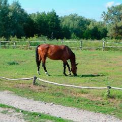Horse glitch (#20)