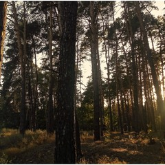 Тёплый лес. Возвращение