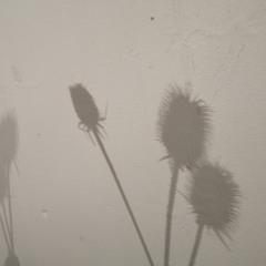 растительные тени / growing shadows