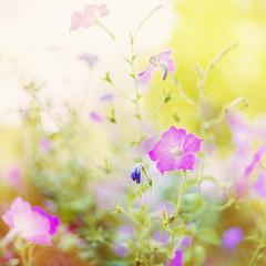 Квіти в сонячному сяйві...