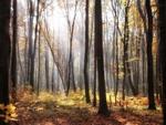 Мій ліс