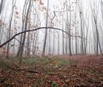 Мой лес в ноябре