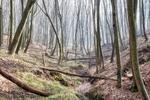 Лісове провалля у березні...