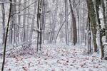 Осінній сніг