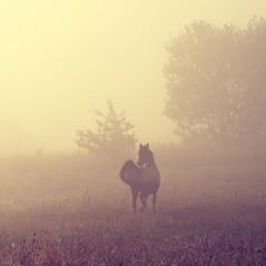 В ранковому тумані