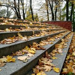 Крокує осінь...