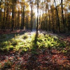 Осінь на порозі...