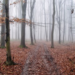 Лісова дорога в туман...