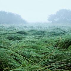 Трава і туман