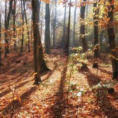 Скоро золота осінь...