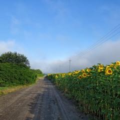 Ранкова дорога до села...