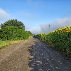 Літня дорога