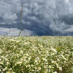 Небо і квіти