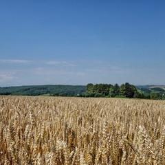 Просто поле край села...