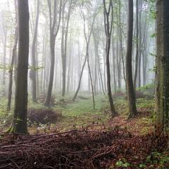 Мій ліс...
