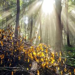 У моєму лісі...