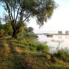 Літнім ранком